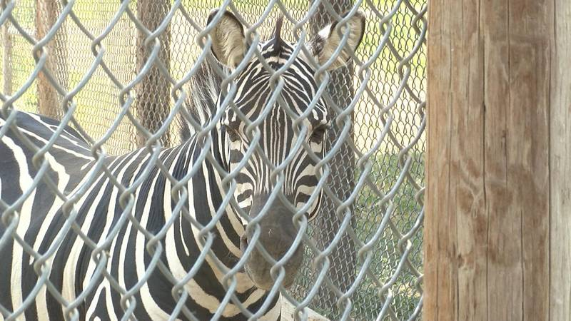 Riverside Discovery Center in Scottsbluff adds three new animals.