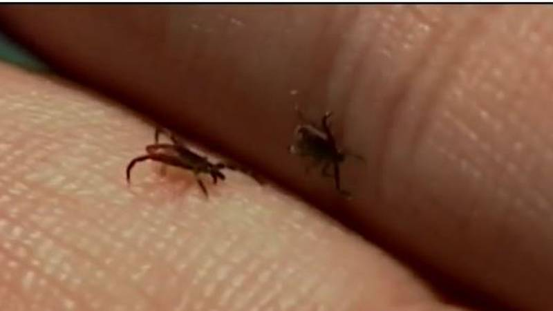 One Nebraska man died from Rocky Mountain Spotted Fever,a tick-borne disease.